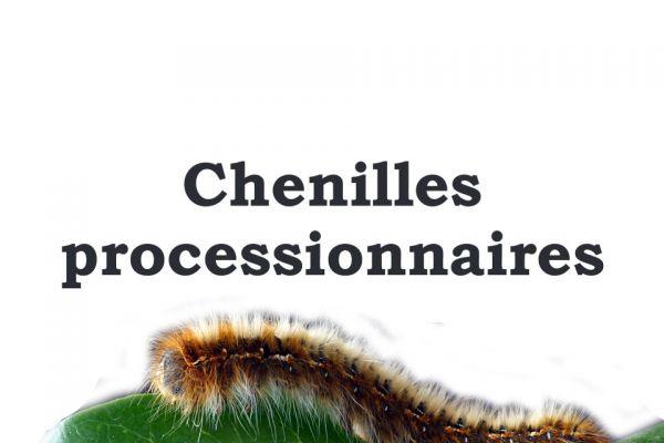 chenilles8A25C9DC-B230-AA3E-2816-6D2FA13F9C1B.jpg